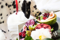 19 Healthy Fruits Dogs Can Safely Eat