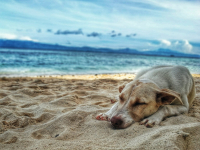 Heatstroke in Dogs: Why You Need to Act Quickly!