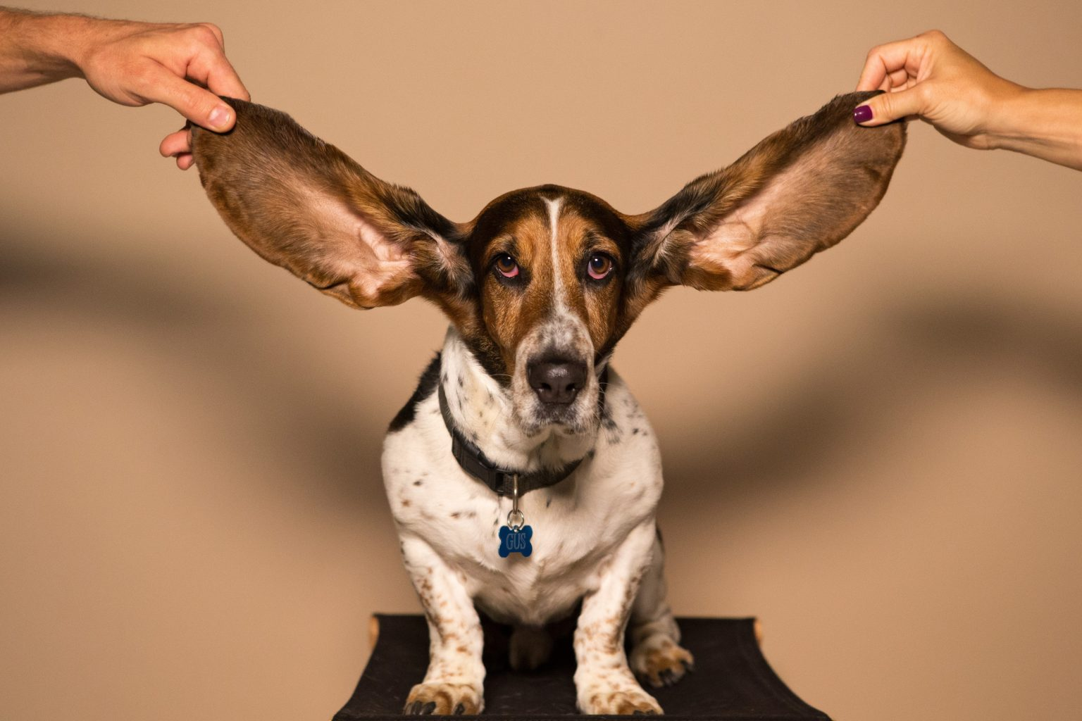 how-to-clean-dog-ears